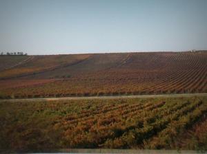 Paysage la Rioja