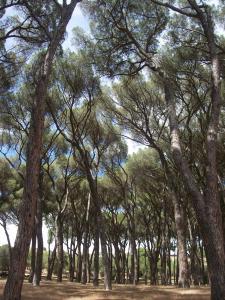 a-madrid-le-parc-de-casa-de-campo-est-un-lieu-parfait-pour-se-reposer-de-la-vie-urbaine