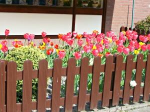 la-decoration-des-maisons-est-fleurie-a-marken