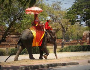elephant-ayutthaya