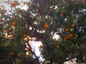 arbre-chefchaouen