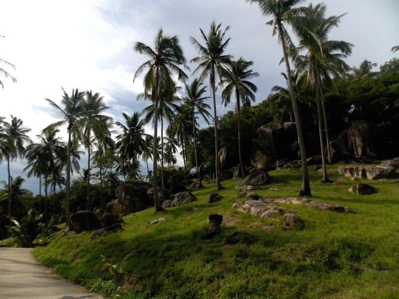 palmiers-koh-tao